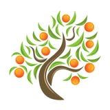 Oranje-boom. Stock Afbeelding