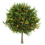 Oranje boom die op wit wordt geïsoleerdl Stock Afbeelding