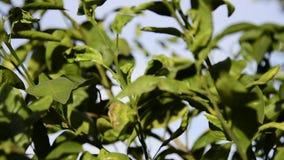 Oranje boombladeren die in wind blazen stock video