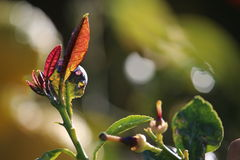 Oranje boombloesems en bladeren Royalty-vrije Stock Afbeeldingen
