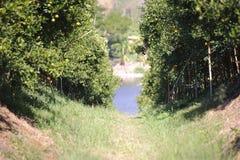Oranje boomlandbouwbedrijf Royalty-vrije Stock Foto