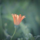 oranje borstel Royalty-vrije Stock Fotografie