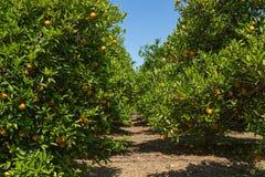 Oranje bosje stock afbeelding