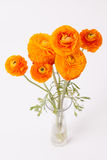 Oranje Boterbloemen in glasvaas op wit Stock Afbeelding