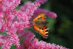 Oranje buuterfly Stock Foto