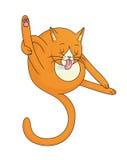 Oranje Cat Licking Stock Afbeeldingen