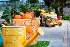 Oranje citrusvruchten Stock Afbeeldingen