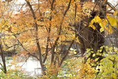 Oranje dalingsboom met gele struiken royalty-vrije stock fotografie