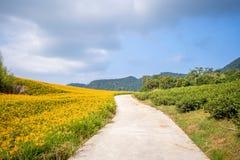 Oranje daylilyTawny bloeit daylily landbouwbedrijf bij chih-KE Royalty-vrije Stock Fotografie