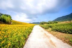 Oranje daylilyTawny bloeit daylily landbouwbedrijf bij chih-KE Stock Foto