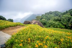 Oranje daylilyTawny bloeit daylily landbouwbedrijf bij chih-KE Stock Fotografie