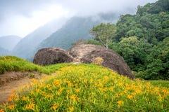 Oranje daylilyTawny bloeit daylily landbouwbedrijf bij chih-KE Stock Foto's