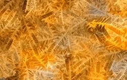 Oranje de herfstachtergrond van exotische bladeren royalty-vrije stock foto's