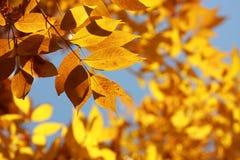 Oranje de herfstbladeren Stock Fotografie