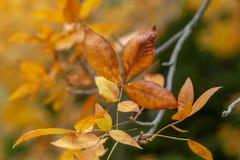 Oranje de Herfstbladeren met vage achtergrond bij Onderstel torenhoge sout stock foto