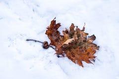 Oranje de herfstbladeren, op een sneeuw, ijzige grond Stock Foto