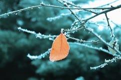 Oranje die blad op een tak met rijp wordt behandeld royalty-vrije stock afbeeldingen