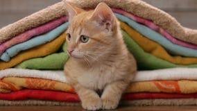 Oranje die katje onder handdoeken wordt genesteld die rond eruit zien stock videobeelden