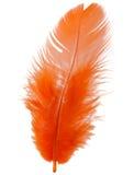 Oranje die veer op wit knipsel wordt geïsoleerd als achtergrond Stock Afbeelding