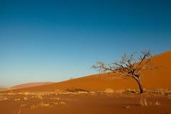 Oranje duin in Namib Stock Afbeelding