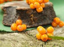 Oranje duindoornbessen Royalty-vrije Stock Afbeeldingen
