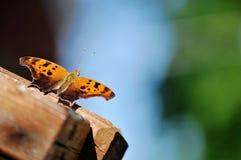 Oranje en bruine vlinder die op houten leuning rusten Royalty-vrije Stock Foto's