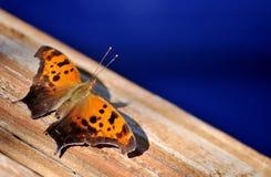 Oranje en bruine vlinder die op houten oppervlakte rusten Stock Foto