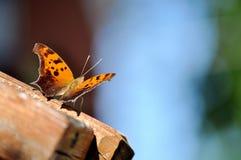 Oranje en bruine vlinder op houten leuning Stock Fotografie