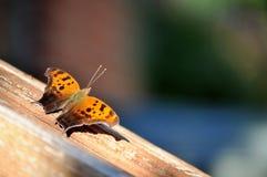 Oranje en bruine vlinder op houten leuning Royalty-vrije Stock Foto's