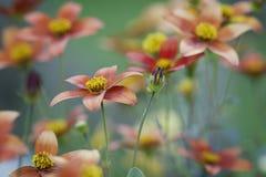 Oranje en gele bloemen tegen groene achtergrond royalty-vrije stock afbeeldingen