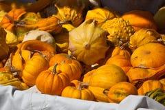 Oranje en gele pompoenen in een markt Stock Foto's