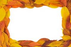 Oranje en Gele van het Bladerenkader 3:2 het van Autumn Red, royalty-vrije stock afbeeldingen