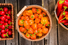 Oranje en roodgloeiende peper in manden Stock Fotografie