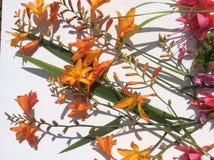 Oranje en roze de tuin wilde bloem van het land Royalty-vrije Stock Foto
