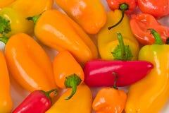 Oranje en Spaanse pepers Royalty-vrije Stock Afbeeldingen