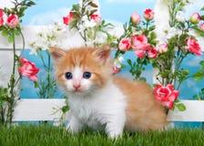 Oranje en witte gestreepte kat dichte omhooggaand in tuin stock afbeeldingen