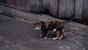 Oranje en zwart katje met grijze toon backgroud royalty-vrije stock afbeeldingen