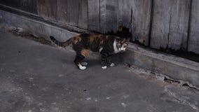 Oranje en zwart katje met grijze toon backgroud royalty-vrije stock foto's