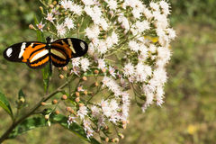 Oranje en zwarte vlinder op zwarte achtergrond defocusede royalty-vrije stock foto's