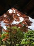 Oranje esdoornbladeren in Kyoto stock foto