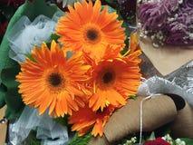 Oranje gerberamadeliefje Stock Foto's