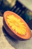 Oranje gerberamadeliefje die in water drijven Royalty-vrije Stock Afbeeldingen