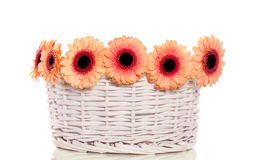 Oranje gerberbloemen Royalty-vrije Stock Foto's