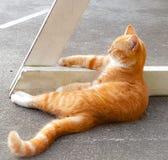 Oranje Gestreepte katzitting Stock Fotografie