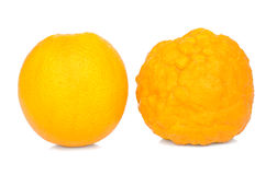 Oranje gezond en ziek. Stock Foto's