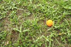 Oranje golfbal op groen gras royalty-vrije stock foto's