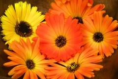 Oranje goudsbloem in kom Royalty-vrije Stock Afbeeldingen