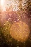 Oranje gras en bloemen Zonsondergang, August Walking in de weide stock foto