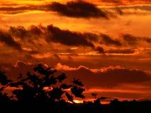 Oranje hemel bij zonsondergang Royalty-vrije Stock Foto's