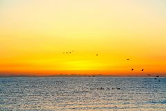 Oranje hemel en vogels vóór zonsopgang in Qinghai-Meer, China stock afbeeldingen